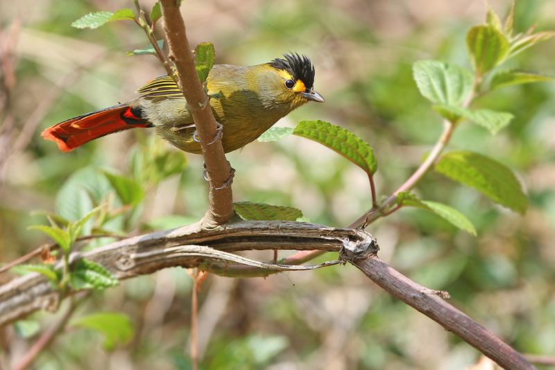 Sichuan Birding Tours: 3 Birds that You Simply cannot Miss out while in China