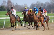 3 Health Issues Usually Observed In Thoroughbreds