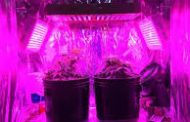 Highly important Factors About best led grow lights for cannabis