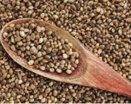 Hemp Seeds Nutritional Factors & Growing Conditions! What You Are Missing?