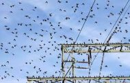 Get High-Quality Bird Guards and Shield Wire Earthing